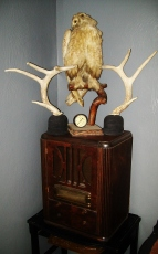 Writing Alchemy Lab - Victorian taxidermied owl, an old radio i gutted & turned into hidden storage